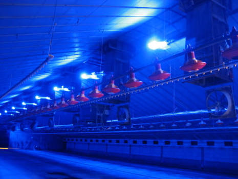 Blue LED lights used in chicken farm lighting systems and poultry farming available from Eco Industrial Supplies